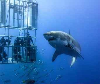 https://www.bemyguestlodge.co.za/wp-content/uploads/2018/08/sport-cape-town-helicopters-tours-shark-cage-diving